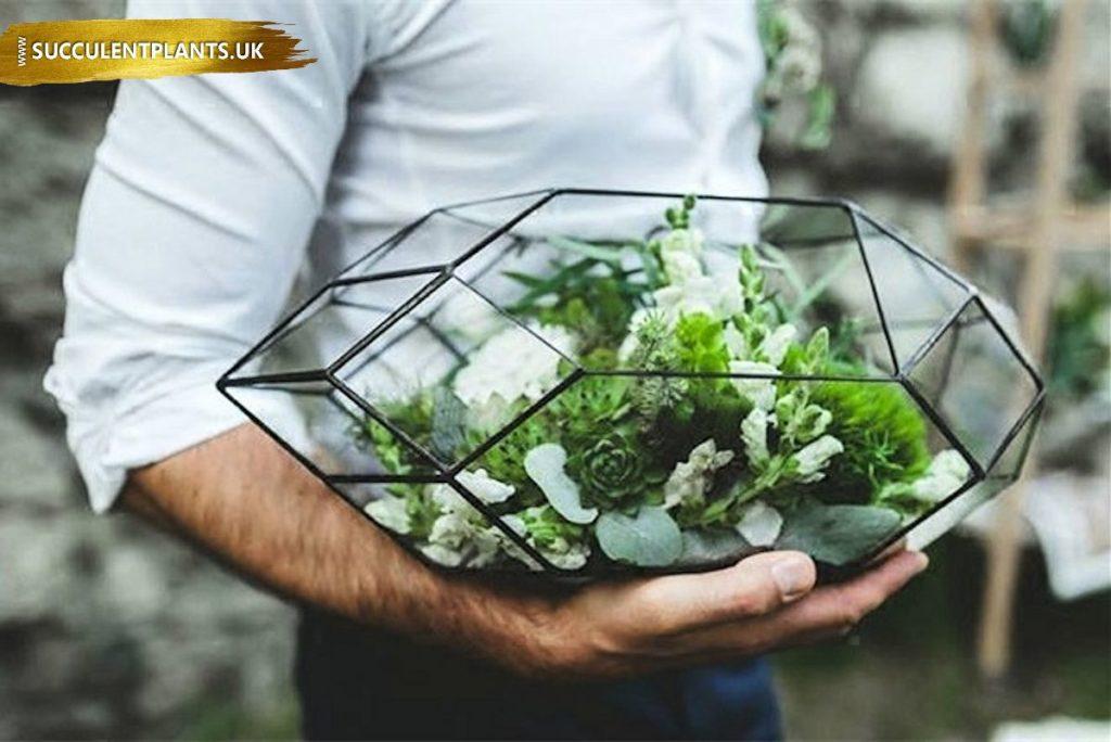 Terrarium Succulent Plants Uk